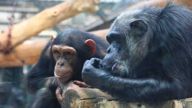 ZooParc de Beauval, Saint Aignan